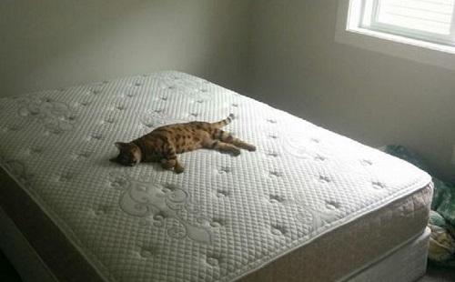 кошка спит на белом матрасе
