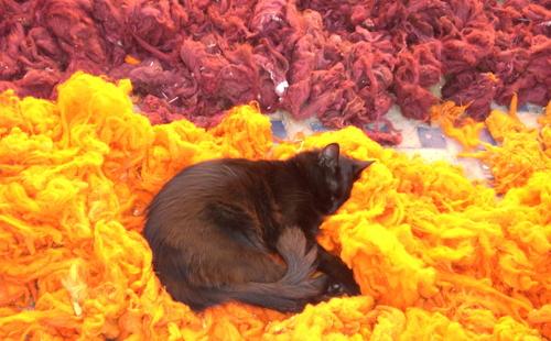 кошка лежин на красном и желтом ковре