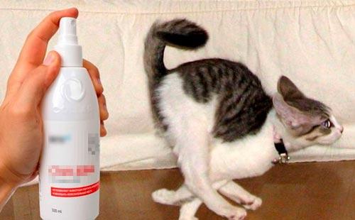 Как избавиться от запаха кошачьей мочи на диване если пятно старое?