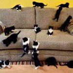 Как убрать кошачью мочу с дивана? ВСЕ рецепты чистоты!
