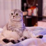 Как легко вывести запах кошачьей мочи с дивана в домашних условиях